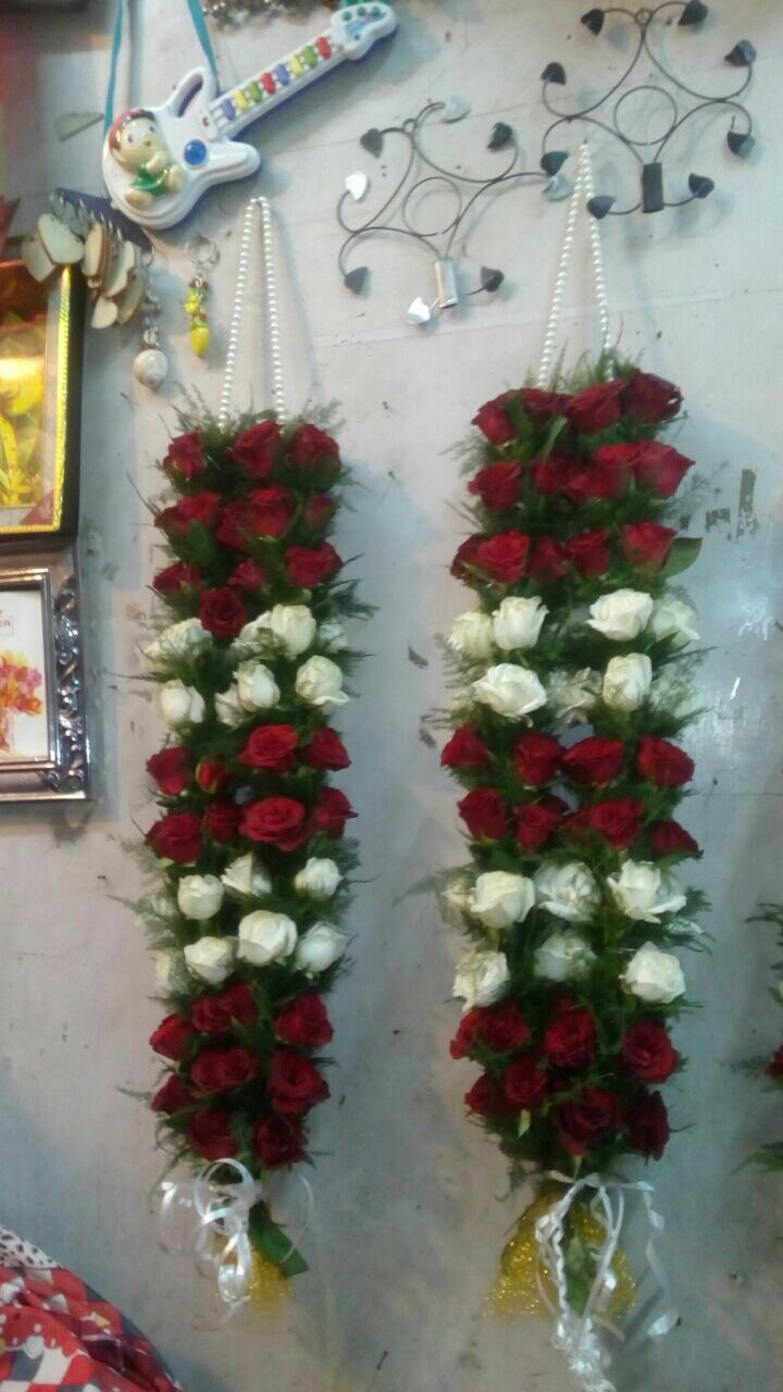 Any color Rose Jaimal in kanpur