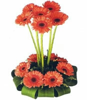 orchid flower bunch delivery in kanpur